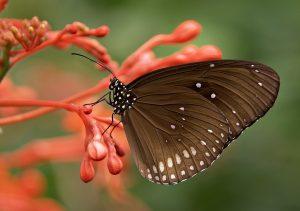 A borboleta e o vidro